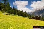 landschaft-sommer-16